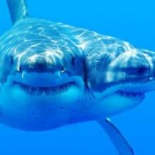 Окумуштуулар лабораторияда эки баштуу акула багышкан