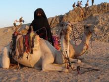 """Сауд Арабиясынын окумуштуулары аялдарды төөгө теңеп, """"статусун"""" өйдө көтөрүштү"""