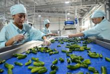 Евразиялык биримдикке интеграцияланган Кыргызстан өзүнүн экономикасын калыбына келтирүүдө